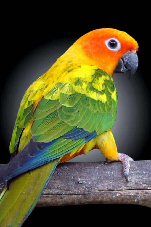 Best Bird Food For Conures